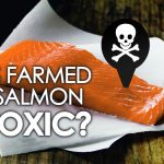 Is Farmed Salmon Toxic?